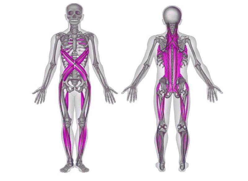 acadia, Skeleton